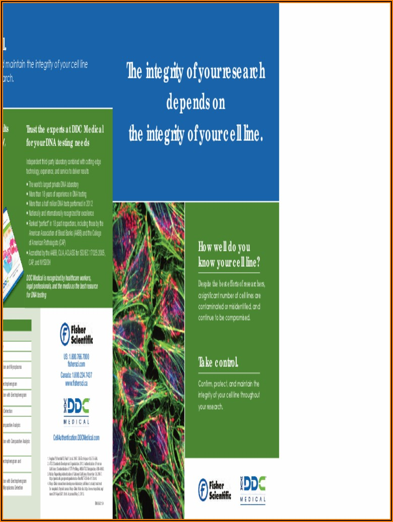 Medical Brochure Template Word Free