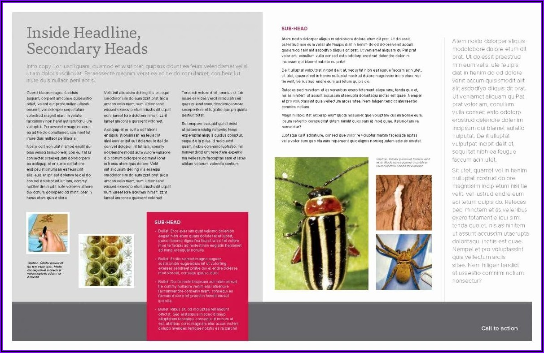11x17 Brochure Template Word Free
