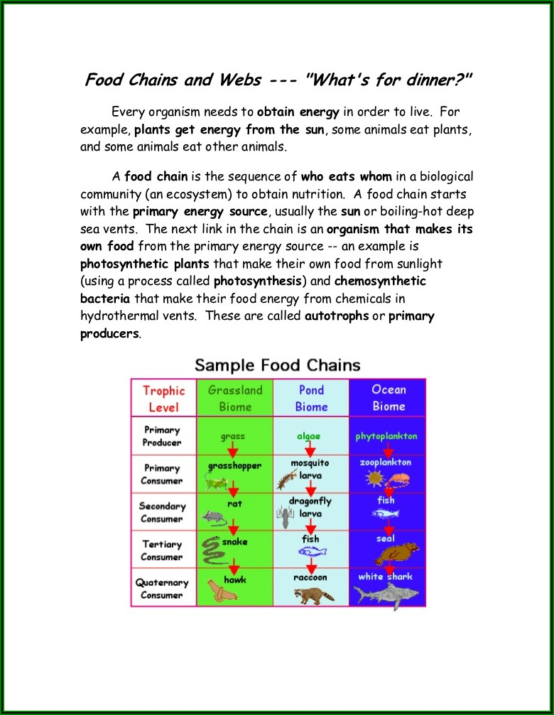 Food Web Lesson Plan Middle School