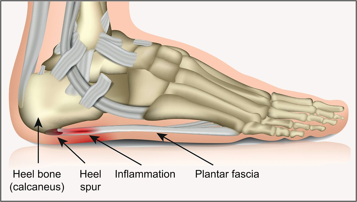Parts Of The Bottom Of The Foot Diagram