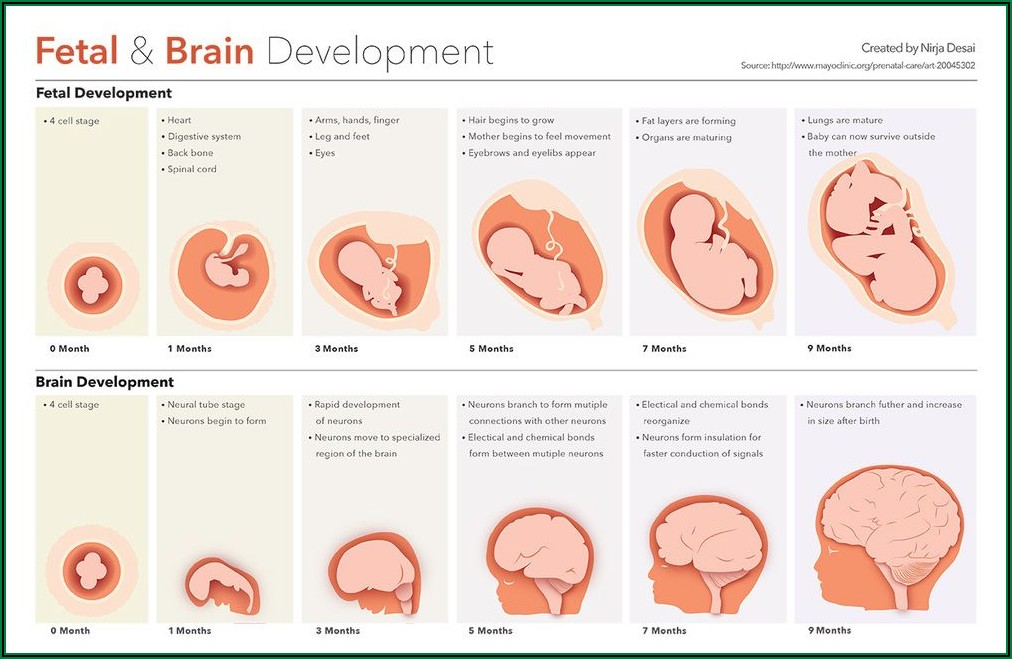 Prenatal Development Timeline Project