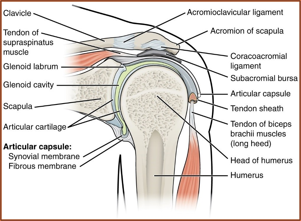 Shoulder Impingement Surgery Recovery Time Uk