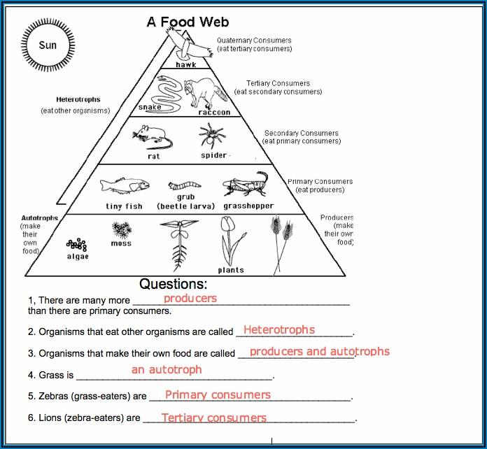 Food Chain Worksheet 1 A Answer Key
