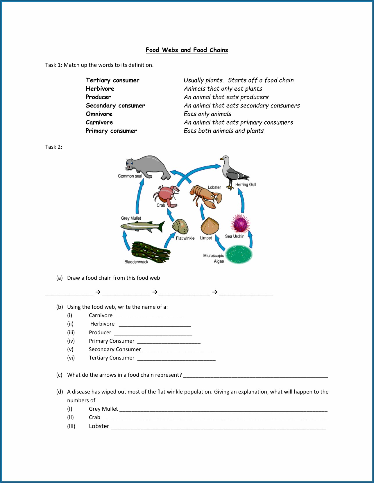 Food Chain Worksheet 1 B Answers