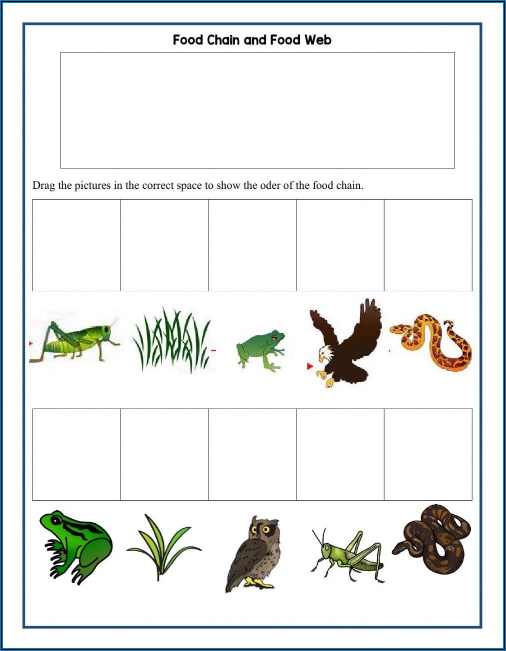 Food Chain Worksheet Grade 1