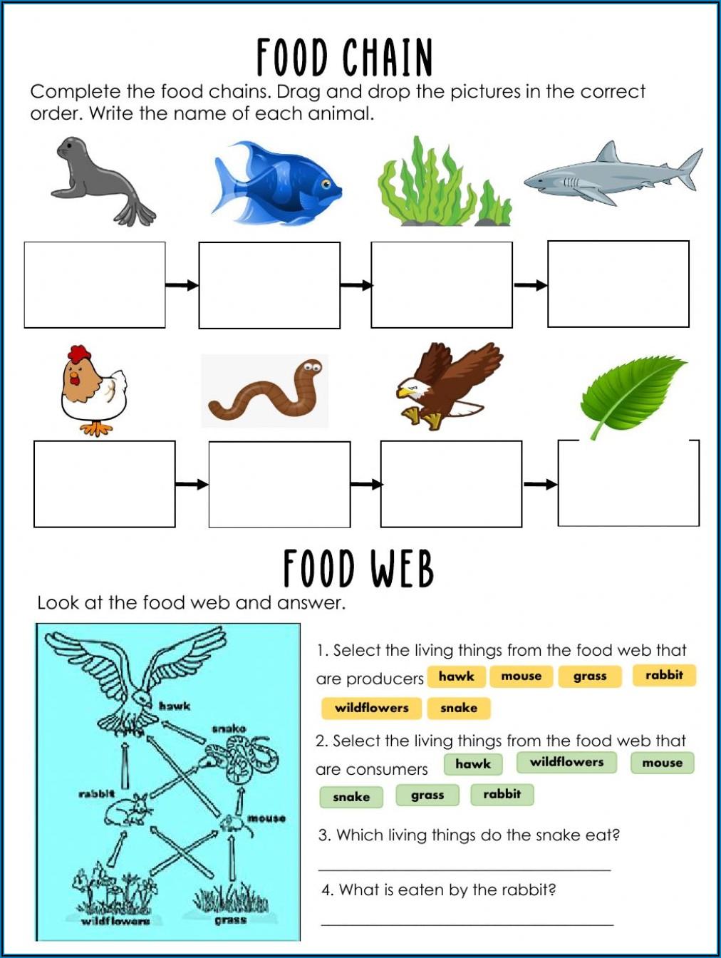 Food Chain Worksheet Year 1