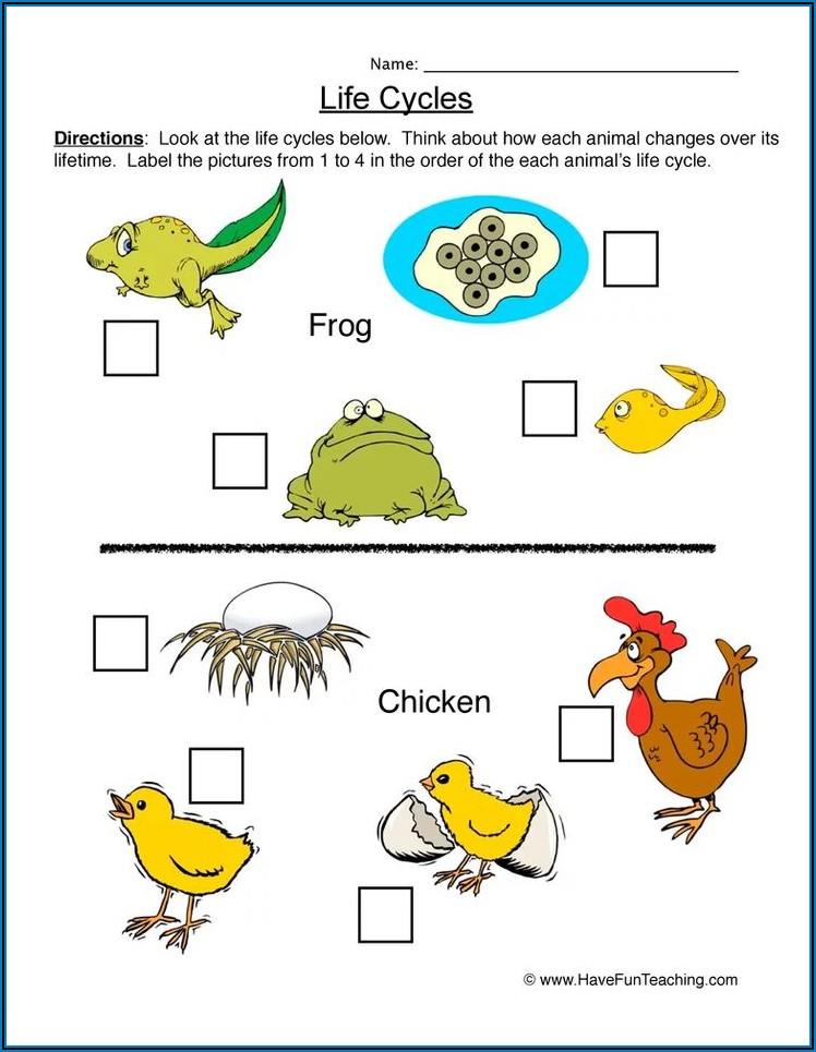 Life Cycle Of Human Worksheet Grade 4